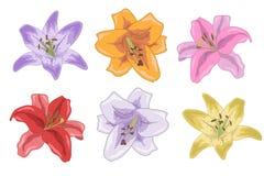 Satz helle Lilien für Ihr Design Stockbilder