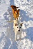 Satz Hunde Stockfoto