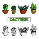 Satz Kaktus und saftige Anlagen in den Blumentöpfen Stockbild