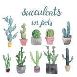 Satz Kaktus und Succulents lokalisiert auf weißem Hintergrund Stockfotografie