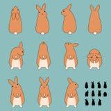 Satz Kaninchensitzenhaltungen Stockbild