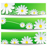 Satz kreative Fahnen mit Kamille der weißen Blume Stockbilder