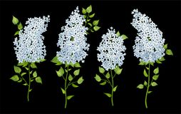 Satz lila Blumen Stockbild