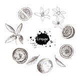 Satz lokalisierte Hand gezeichnete Orangen, Scheiben und Blumen in der Skizze Lizenzfreies Stockfoto