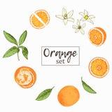 Satz lokalisierte Hand gezeichnete Orangen, Scheiben und Blumen in der Skizze vektor abbildung