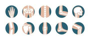 Satz menschliche Gelenke und Knochen Vector Knie-, Bein-, Pelvis-, Schulterblatt-, Schädel-, Ellbogen-, Fuß- und Handikonen Ortho vektor abbildung