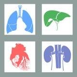 Satz menschliche Organe Stockbilder