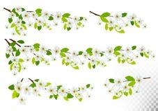Satz Naturhintergründe mit Frühlingsblüte der Kirsche Stockfotografie