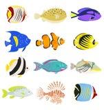 Satz nette tropische Fische auf weißem Hintergrund vektor abbildung