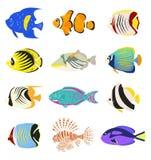 Satz nette tropische Fische auf weißem Hintergrund stock abbildung