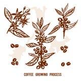 Satz Niederlassungskaffee gemalt durch Bürste von Hand gezeichnet Stockfotografie
