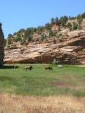 Satz Pferde, Utah Lizenzfreies Stockbild