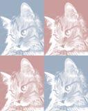 Satz Porträts von Katze ` s Gesicht im Profil, netter Pussycat entspannte sich das Schauen, zum mit Seiten zu versehen Lizenzfreie Stockfotografie