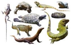 Satz Reptilien lokalisiert lizenzfreie stockfotos
