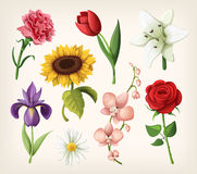 Satz romantische Sommerblumen Lizenzfreie Stockfotos