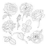Satz rosafarbene Blumen des Vektors Schwarzweiss-gezeichnete rosafarbene Blumen des Entwurfs Hand stock abbildung