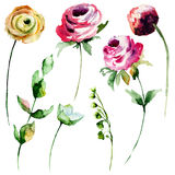 Satz Rosen- und Pfingstrosenblumen Stockfotos