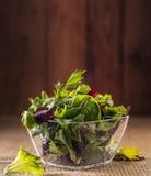 Satz Salatblätter Lizenzfreies Stockbild