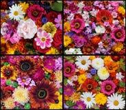 Satz schöne Blumenhintergründe Lizenzfreies Stockbild