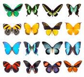 Satz schöne und bunte Schmetterlinge Lizenzfreies Stockbild