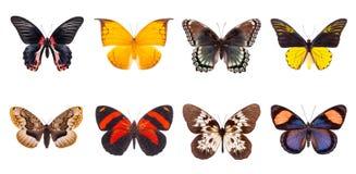 Satz schöne und bunte Schmetterlinge Lizenzfreies Stockfoto