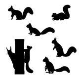 Satz Schattenbilder von Eichhörnchen Stockfotos