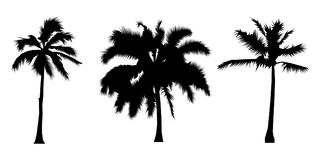 Satz Schattenbildkokosnussbäume, Auflösungszeichen, Vektorillustration Stockbilder
