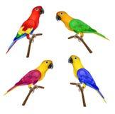 Satz schöne bunte Papageien auf weißem Hintergrund Stockfoto