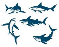 Satz schwarze Schattenbilder der großen Haifische Stockfotos