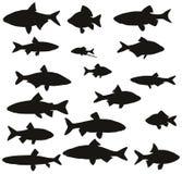 Satz schwarze Schattenbilder von gemeinen Flussfischen Stockbild
