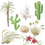 Satz Steppe und Wüstenpflanzen Stockbilder