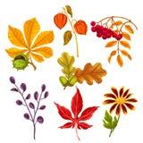 Satz stilisierter Herbstlaub und Anlagen Gegenstände für Dekoration, Design auf Werbungsbroschüren, Fahnen, flayers Stockbild