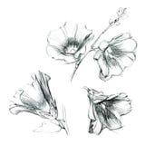 Satz Stockroseblumen Hand gezeichnete Skizze durch Tinte Stockfotos