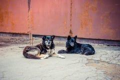 Satz Streuhunde Lizenzfreie Stockfotos