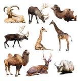 Satz Säugetiertiere über weißem Hintergrund mit Schatten Stockfotografie