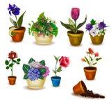 Satz Töpfe mit Blumen Lizenzfreie Stockfotografie