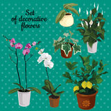Satz Topfpflanzen mit Blumen vektor abbildung
