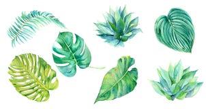 Satz tropische Blätter des Aquarells Stockbilder