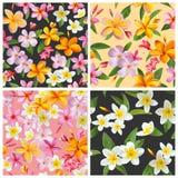 Satz tropische Blumen-Hintergründe Stockfotos