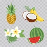 Satz tropische Früchte der Vektor-Illustrations-Ikonen mit Blättern und Blumen Satz modische Illustrationen auf transpare Lizenzfreies Stockfoto