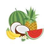 Satz tropische Früchte der Vektor-Illustrations-Ikonen mit Blättern und Blumen Satz modische Illustrationen lokalisiert auf Weiß Lizenzfreie Stockbilder