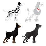 Satz unterschiedliche Zucht von Hunden Lizenzfreie Stockfotografie