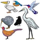 Satz Vögel Stockbilder