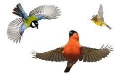 Satz Vögel, die im Garten überwintern Lizenzfreies Stockbild