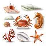 Satz Vektorillustrationen Muscheln, Koralle, Krabbe und Starfish Stockbild