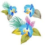 Satz Vektororchideen Stockbilder