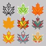 Satz verschiedene Blätter Stockbild