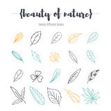 Satz verschiedene Blätter Stockbilder