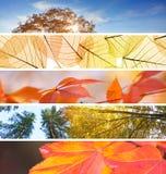Satz verschiedene Fall-Fahnen - buntes Herbstzusammenfassung backgr Lizenzfreies Stockbild