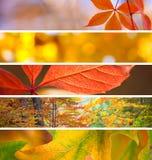 Satz verschiedene Fall-Fahnen - schöne Herbstsaison Stockbilder
